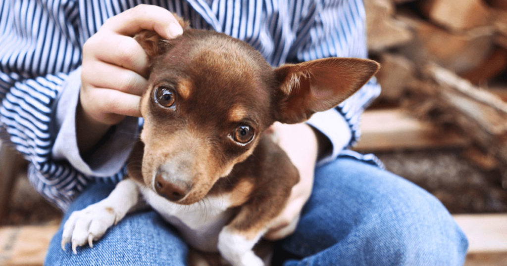 Pets In Williamsport Deserve 24 Hour Care